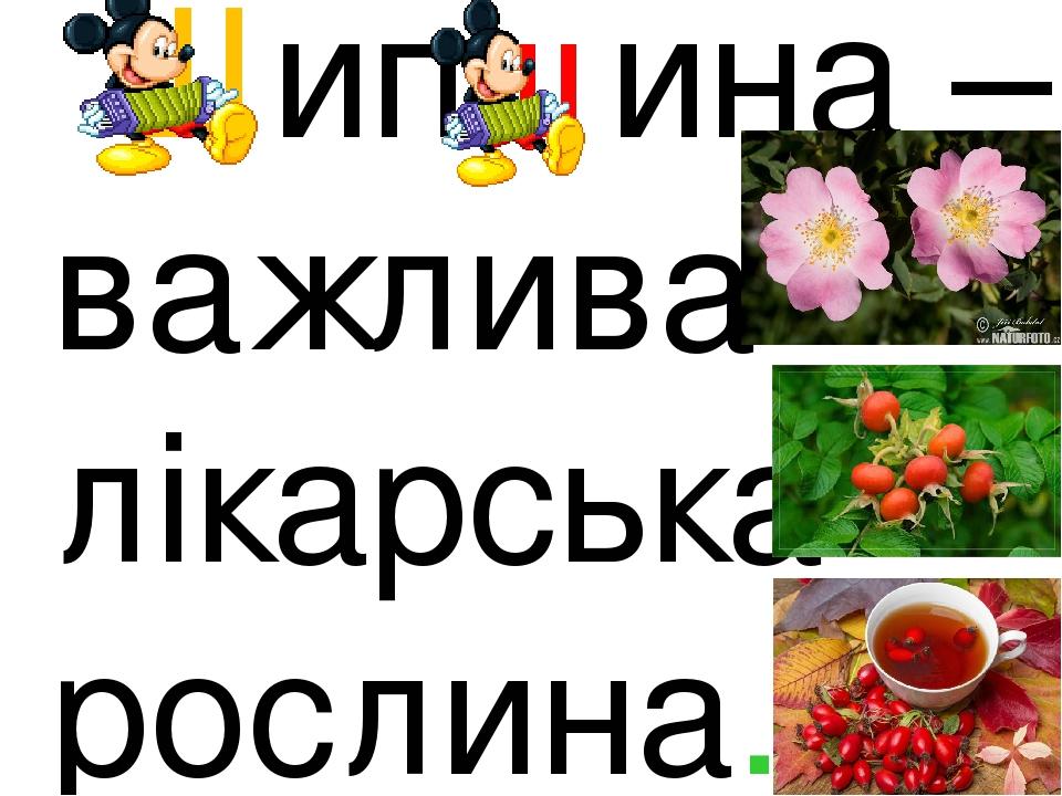 Шипшина – важлива лікарська рослина.