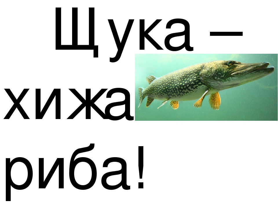 Щука – хижа риба!