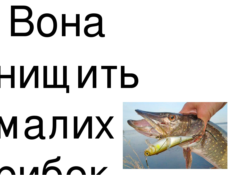 Вона нищить малих рибок.