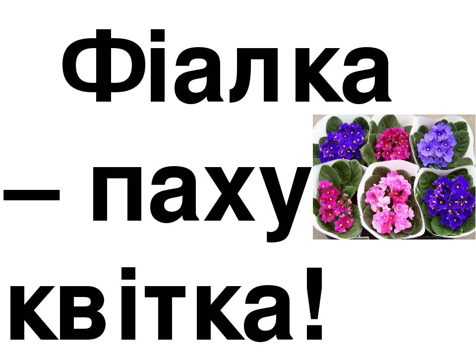 Фіалка – пахуча квітка!