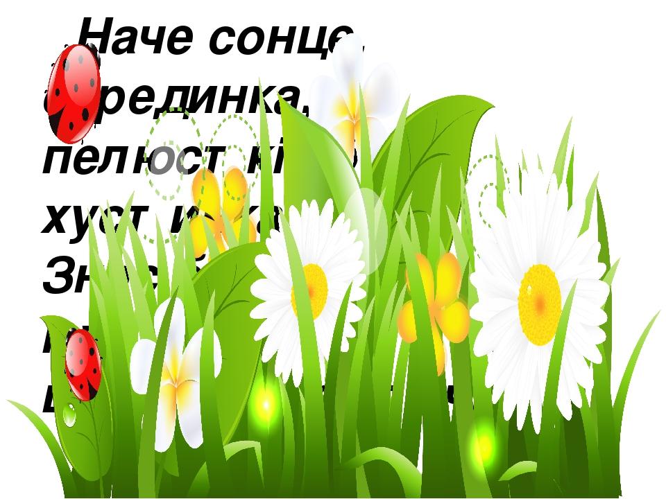 Наче сонце, серединка, пелюстків біла хустинка. Знає бджілка і мурашка, що звуть квіточку ...