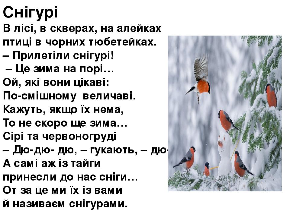 Снігурі В лісі, в скверах, на алейках птиці в чорних тюбетейках. – Прилетіли снігурі! – Це зима на порі… Ой, які вони цікаві: По-смішному величав...
