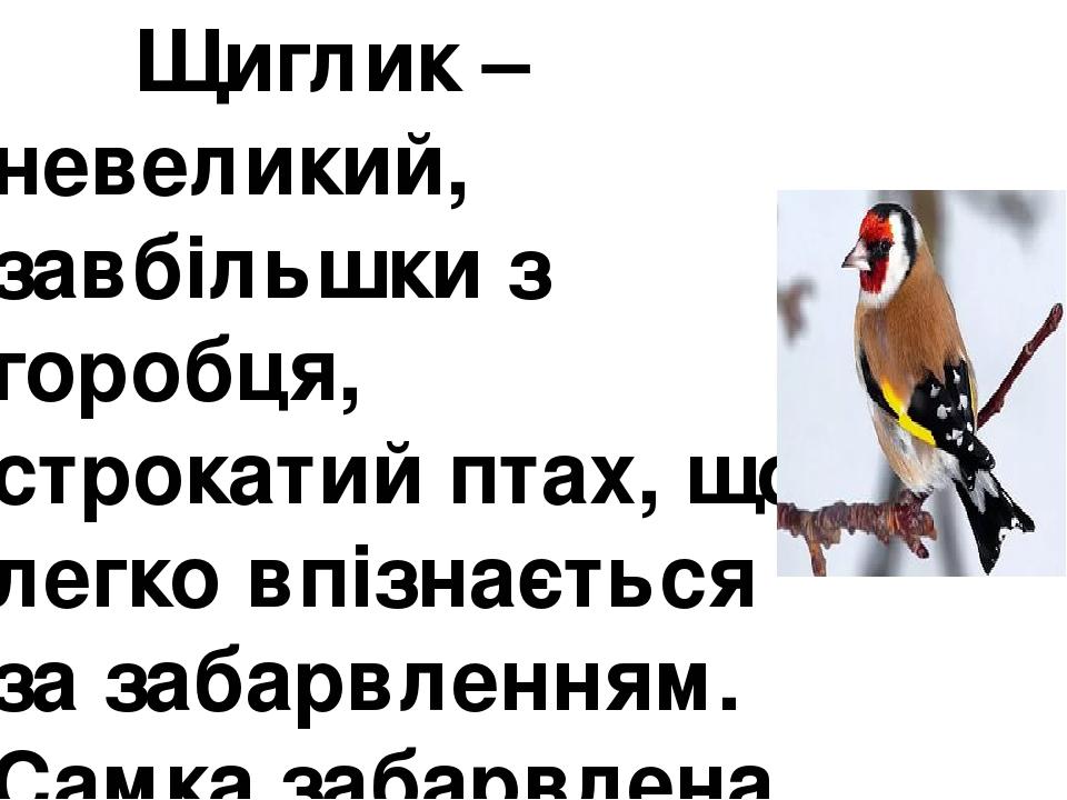 Щиглик – невеликий, завбільшки з горобця, строкатий птах, що легко впізнається за забарвленням. Самка забарвлена так само як самець, але її червона...