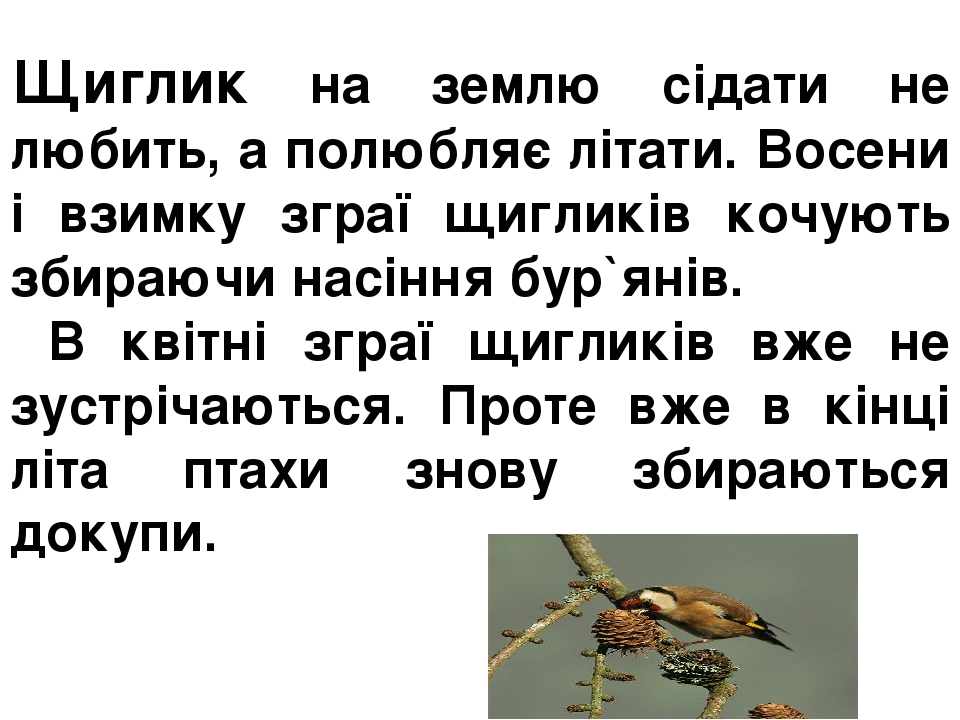Щиглик на землю сідати не любить, а полюбляє літати. Восени і взимку зграї щигликів кочують збираючи насіння бур`янів. В квітні зграї щигликів вже ...