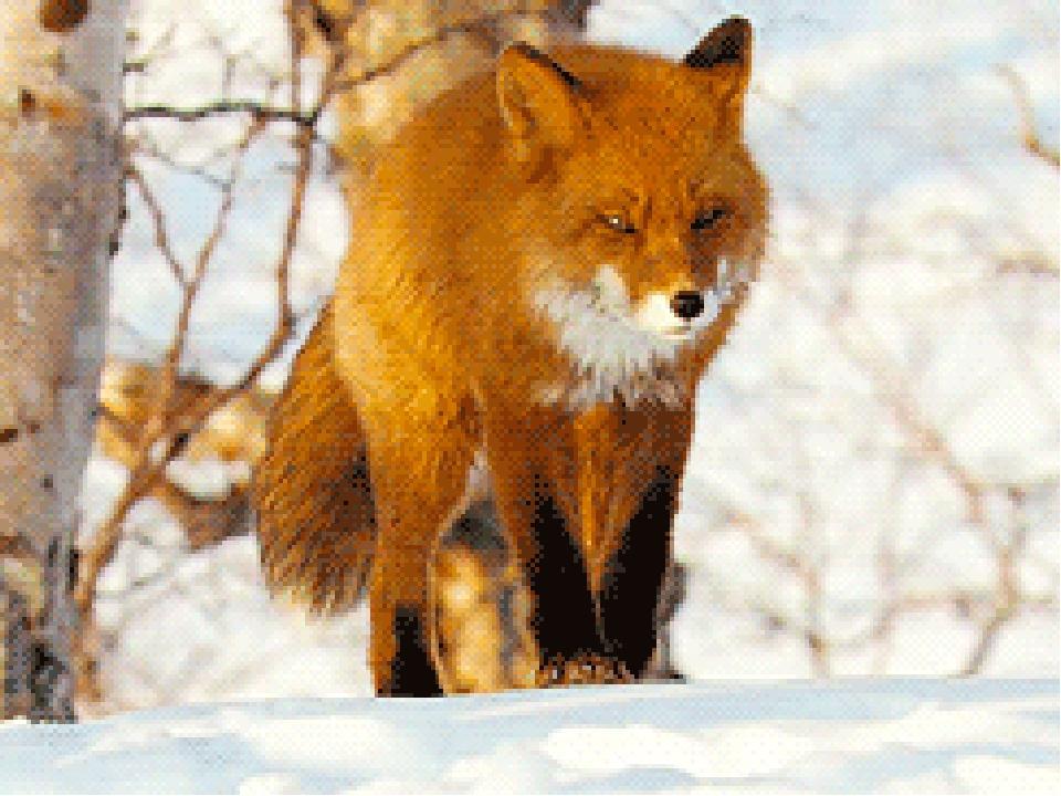 Картинки лисы анимация зимой, открытки