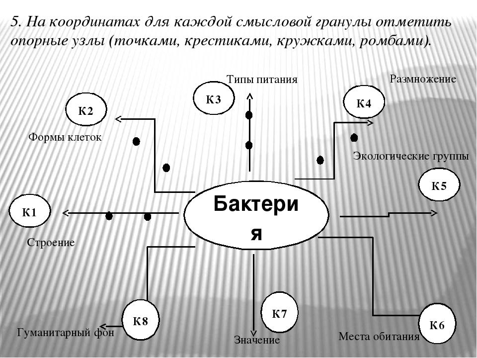 К1 К2 К3 К4 К5 5. На координатах для каждой смысловой гранулы отметить опорные узлы (точками, крестиками, кружками, ромбами). Строение Типы питания...