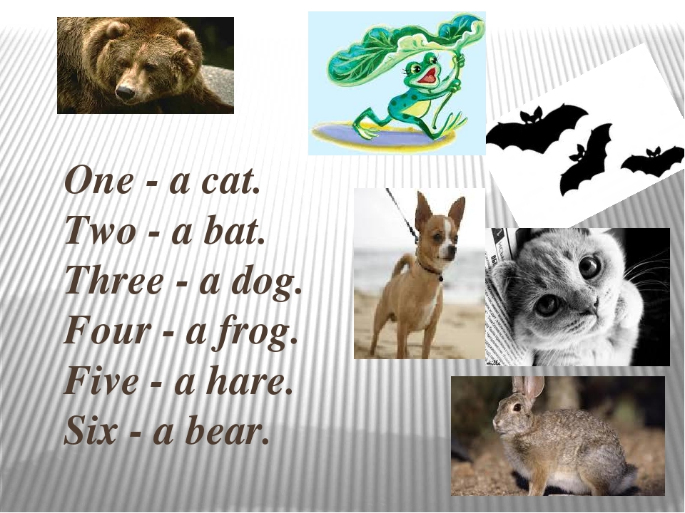 One - a cat. Two - a bat. Three - a dog. Four - a frog. Five - a hare. Six - a bear.