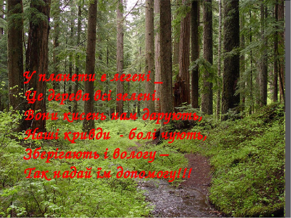 У планети є легені _ Це дерева всі зелені. Вони кисень нам дарують, Наші кривди - болі чують, Зберігають і вологу – Так надай їм допомогу!!!