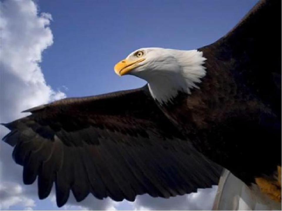 Открытки с днем орла, глубины веков