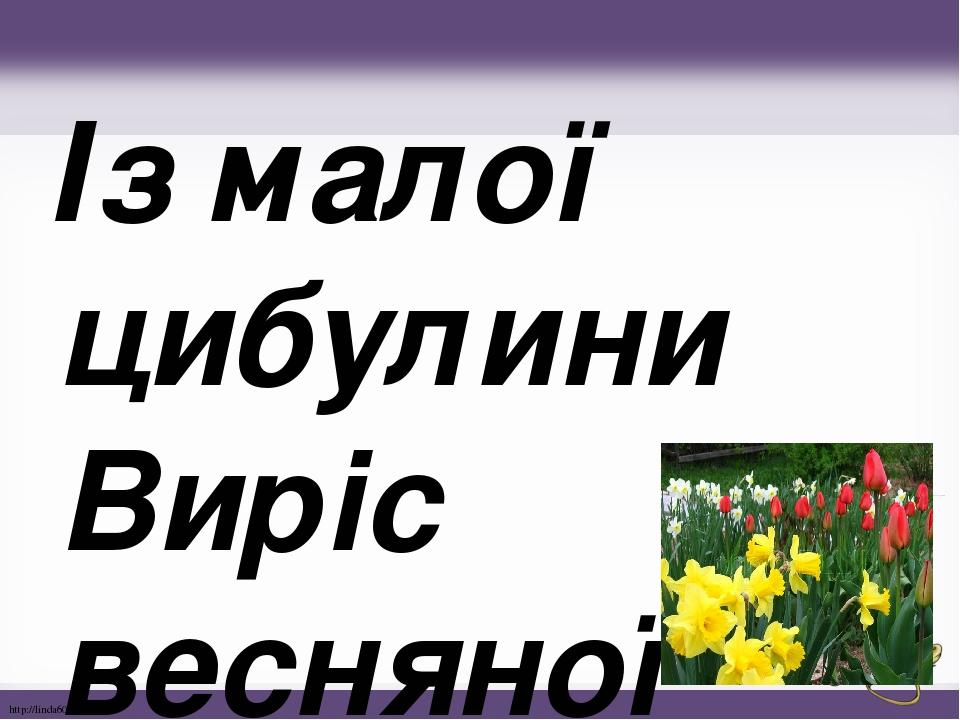 Із малої цибулини Виріс весняної днини. До нарциса привітався Та на грядці запишався. http://linda6035.ucoz.ru/