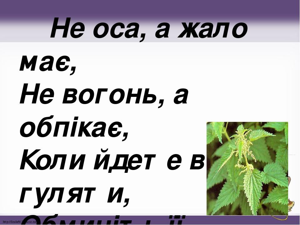 Не оса, а жало має, Не вогонь, а обпікає, Коли йдете в ліс гуляти, Обминіть її, малята. http://linda6035.ucoz.ru/