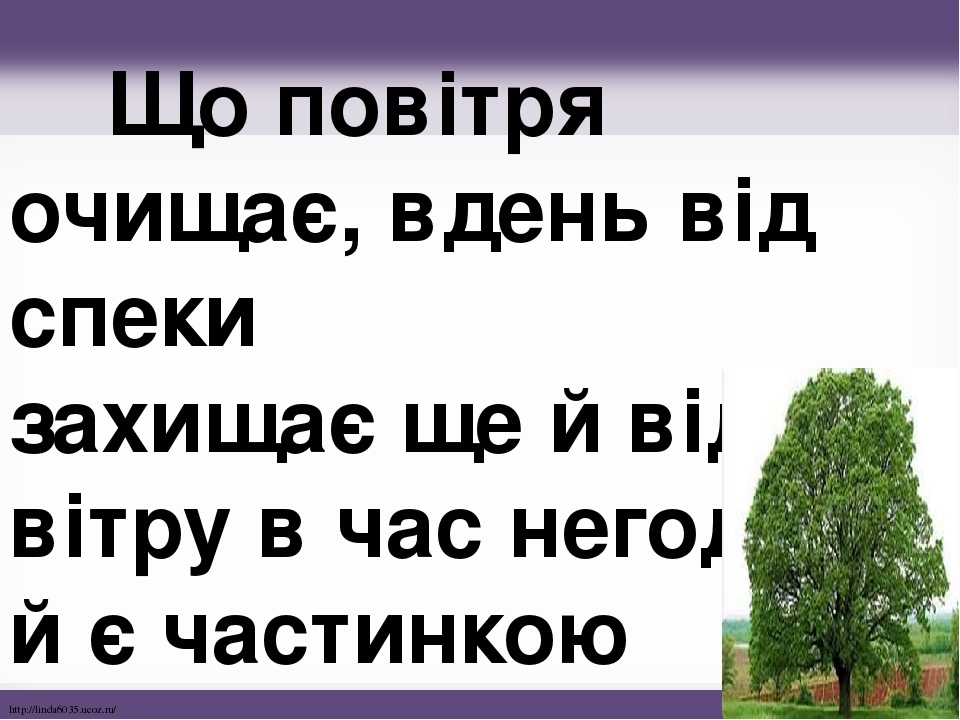 Що повітря очищає, вдень від спеки захищає ще й від вітру в час негоди, й є частинкою природи. http://linda6035.ucoz.ru/