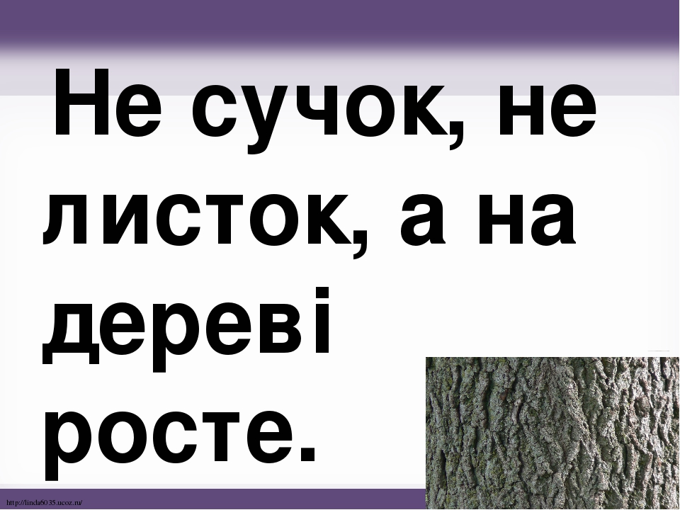Не сучок, не листок, а на дереві росте. http://linda6035.ucoz.ru/