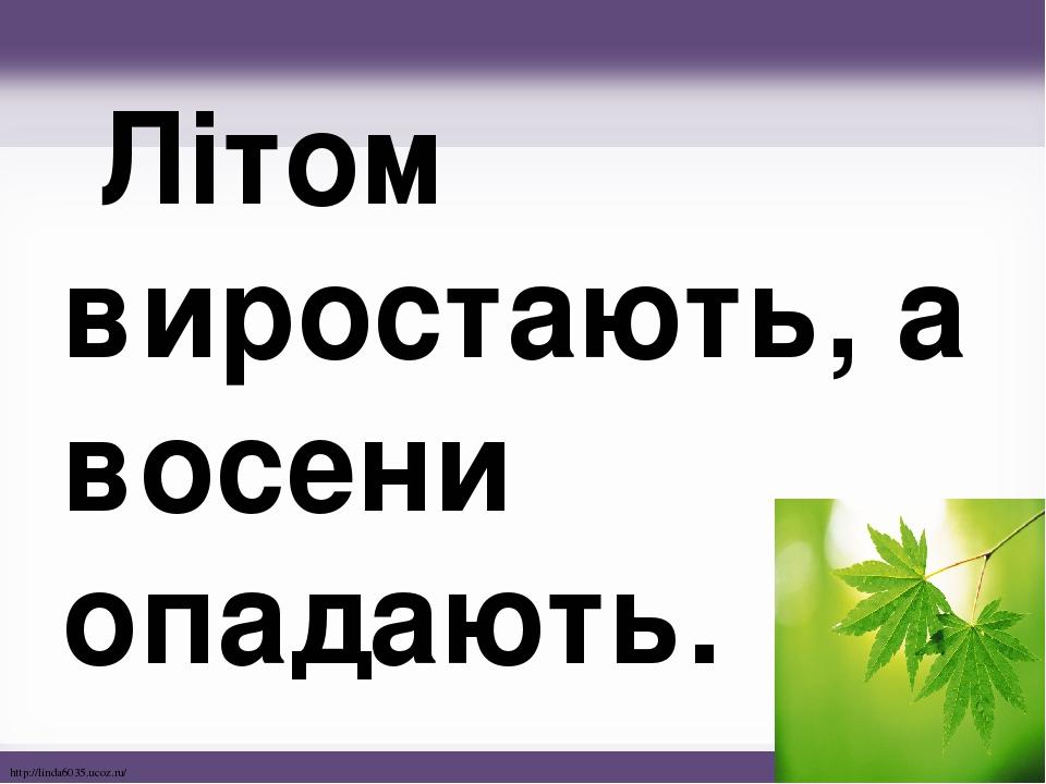 Літом виростають, а восени опадають. http://linda6035.ucoz.ru/