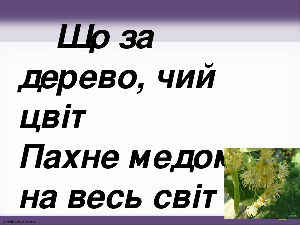 Що за дерево, чий цвіт Пахне медом на весь світ? http://linda6035.ucoz.ru/