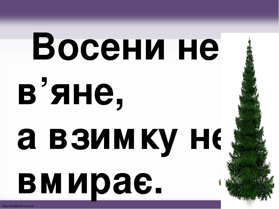 Восени не в'яне, а взимку не вмирає. http://linda6035.ucoz.ru/