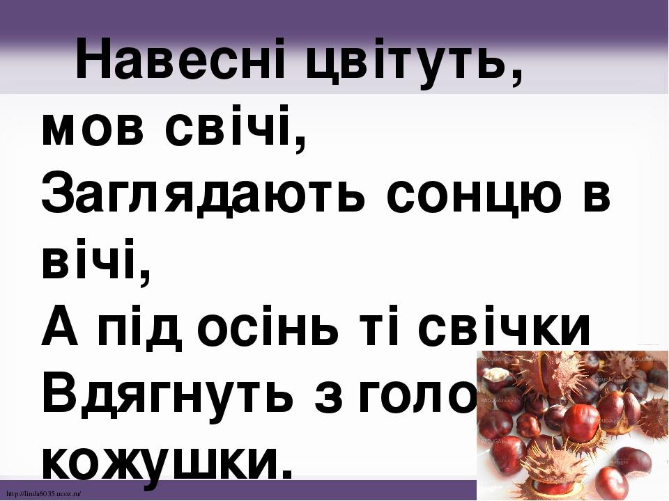 Навесні цвітуть, мов свічі, Заглядають сонцю в вічі, А під осінь ті свічки Вдягнуть з голок кожушки. http://linda6035.ucoz.ru/