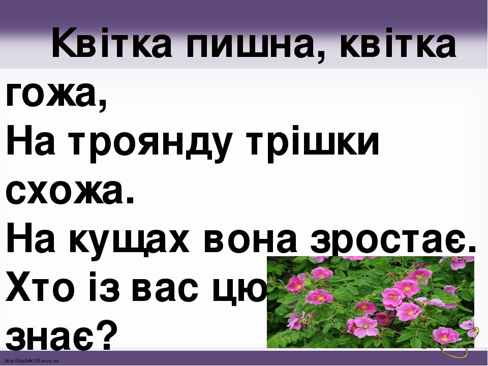 Квітка пишна, квітка гожа, На троянду трішки схожа. На кущах вона зростає. Хто із вас цю квітку знає? http://linda6035.ucoz.ru/