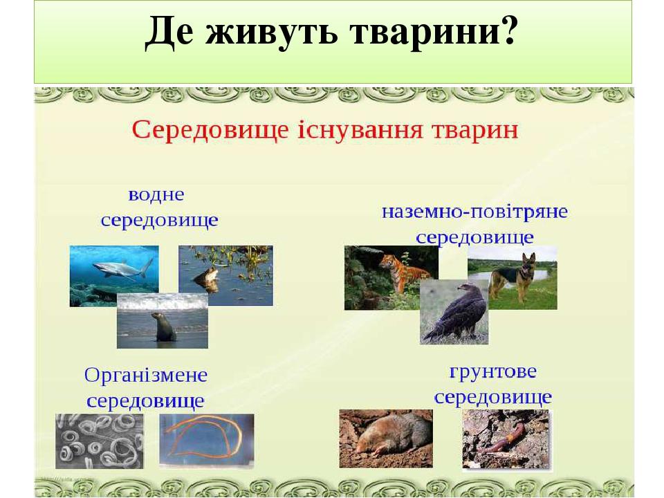 Де живуть тварини?