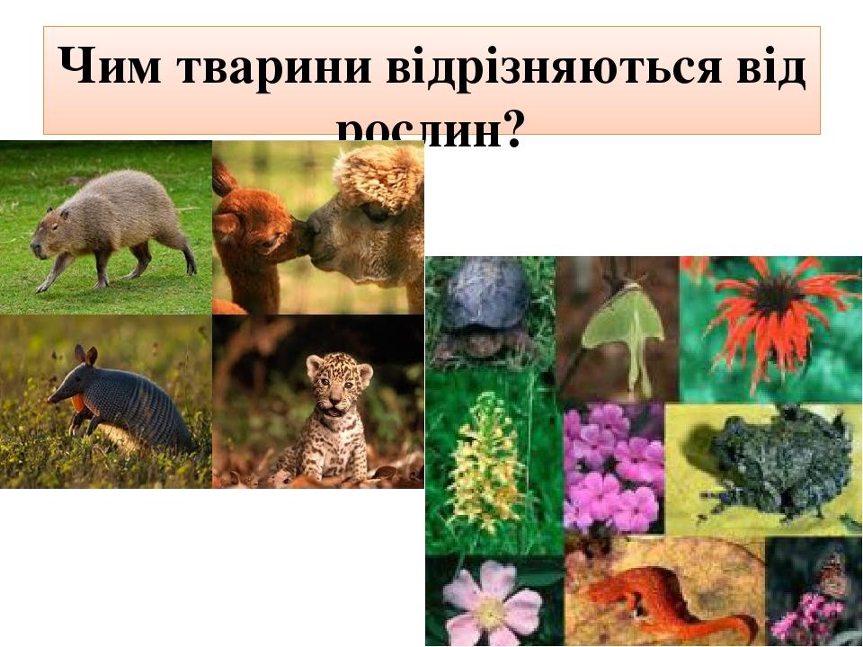 Чим тварини відрізняються від рослин?