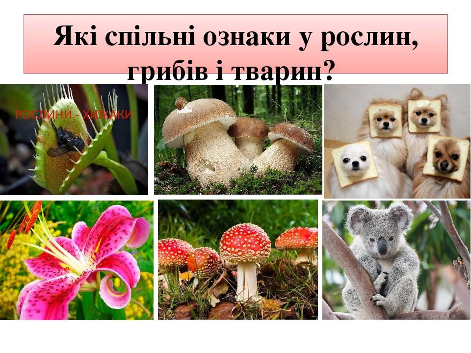 Які спільні ознаки у рослин, грибів і тварин?