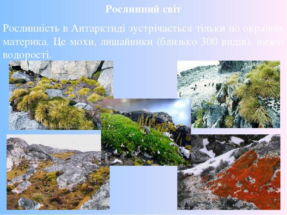 Рослинний світ Рослинність в Антарктиді зустрічається тільки по окраїнах материка. Це мохи, лишайники (близько 300 видів), нижчі водорості.