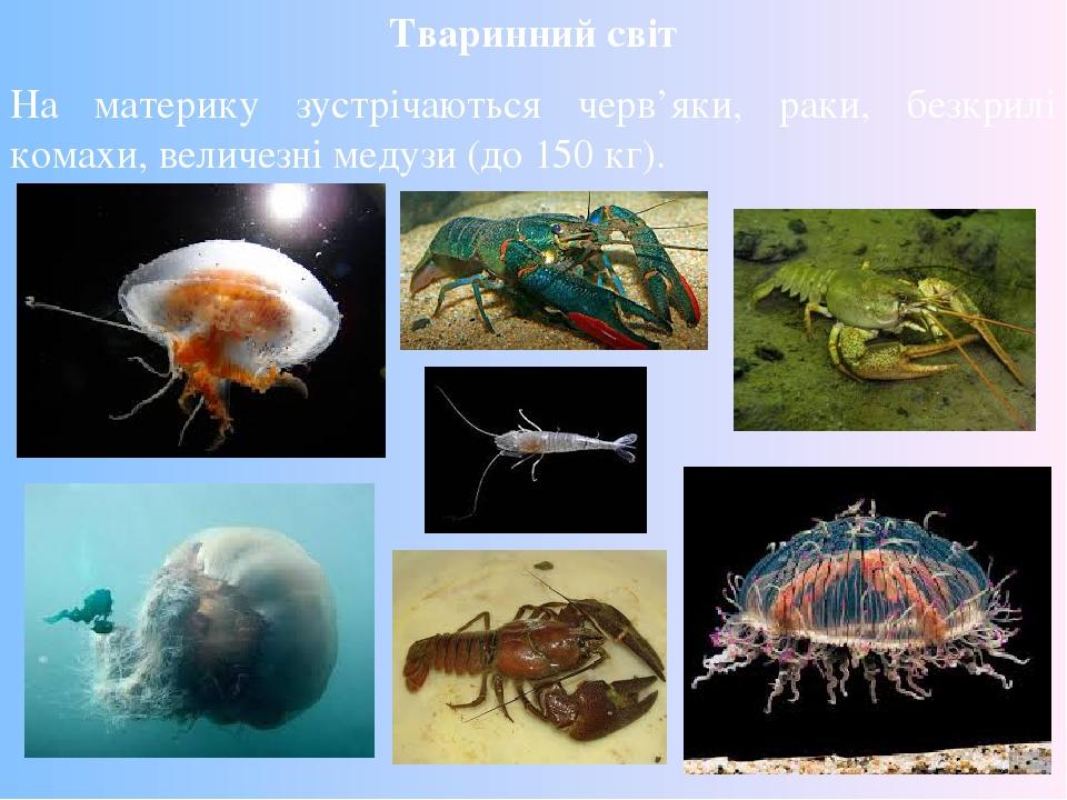 Тваринний світ На материку зустрічаються черв'яки, раки, безкрилі комахи, величезні медузи (до 150 кг).