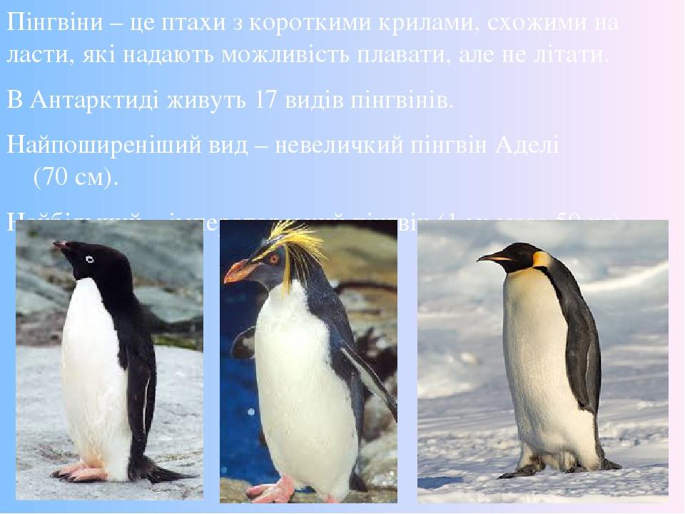 Пінгвіни – це птахи з короткими крилами, схожими на ласти, які надають можливість плавати, але не літати. В Антарктиді живуть 17 видів пінгвінів. Н...