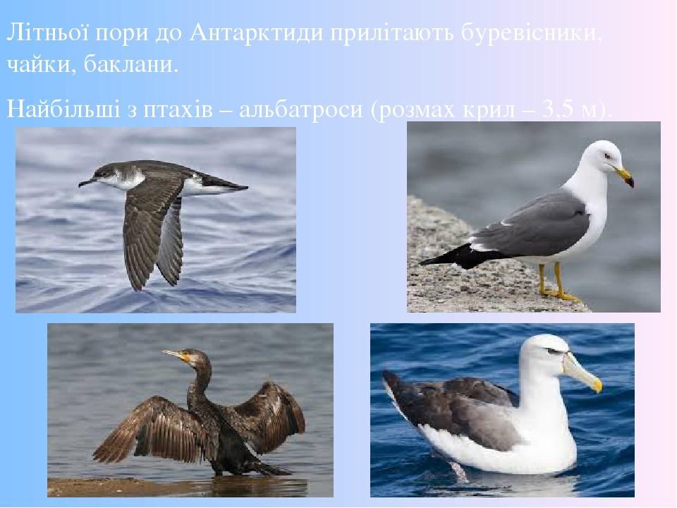 Літньої пори до Антарктиди прилітають буревісники, чайки, баклани. Найбільші з птахів – альбатроси (розмах крил – 3,5 м).