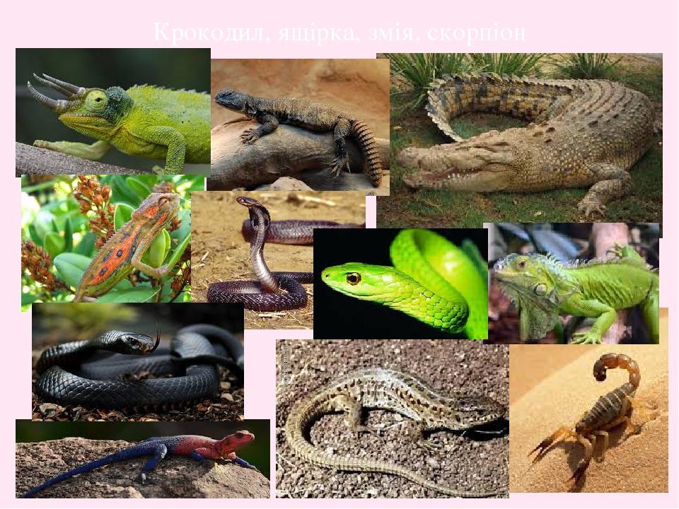 Крокодил, ящірка, змія, скорпіон