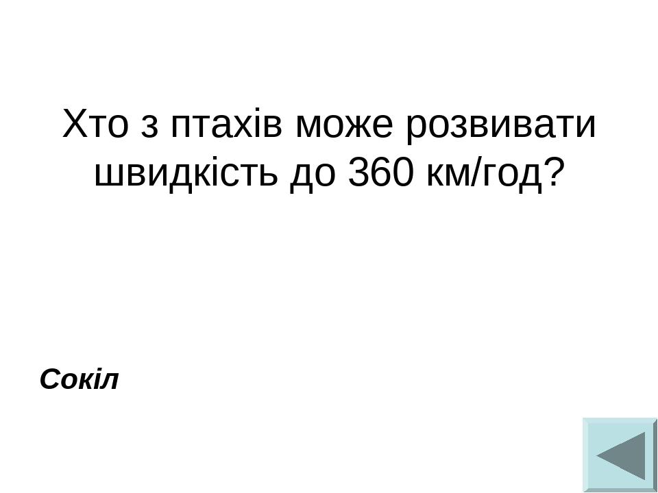 Хто з птахів може розвивати швидкість до 360 км/год?  Сокіл