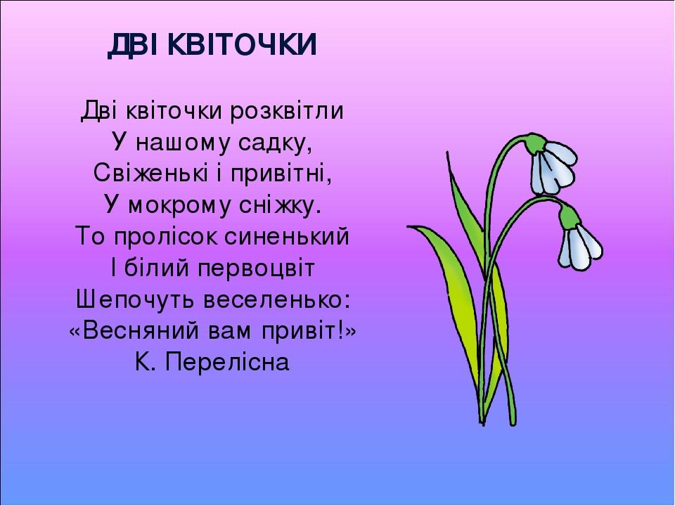 ДВІ КВІТОЧКИ Дві квіточки розквітли У нашому садку, Свіженькі і привітні, У мокрому сніжку. То пролісок синенький І білий первоцвіт Шепочуть веселе...