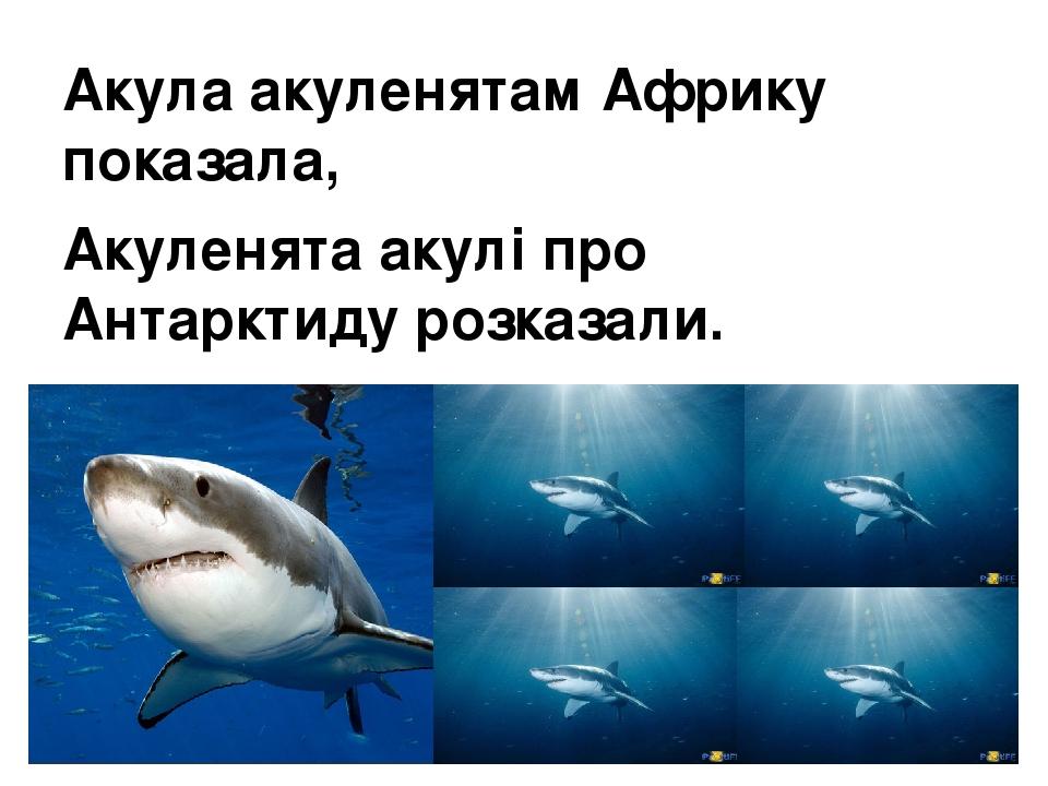 Акула акуленятам Африку показала, Акуленята акулі про Антарктиду розказали.