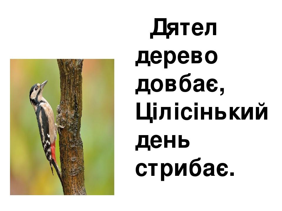 Дятел дерево довбає, Цілісінький день стрибає.
