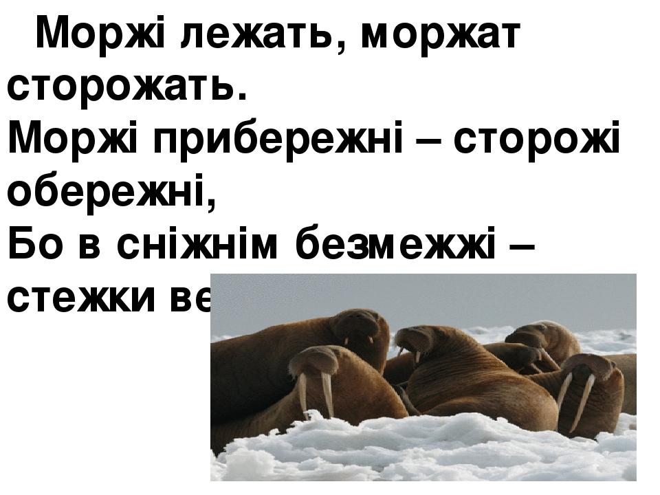 Моржі лежать, моржат сторожать. Моржі прибережні – сторожі обережні, Бо в сніжнім безмежжі – стежки ведмежі.