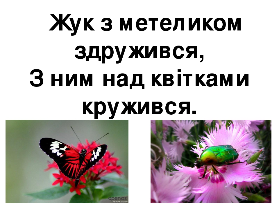 Жук з метеликом здружився, З ним над квітками кружився.