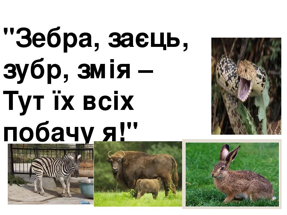 """""""Зебра, заєць, зубр, змія – Тут їх всіх побачу я!"""""""