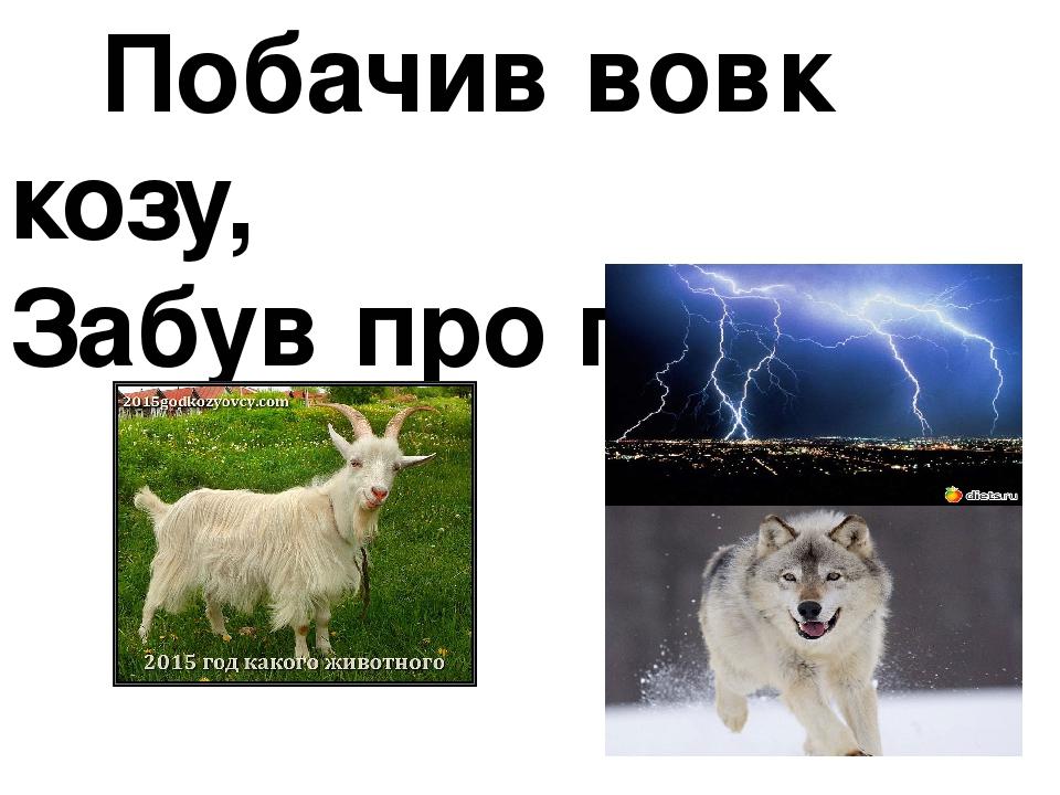 Побачив вовк козу, Забув про грозу.
