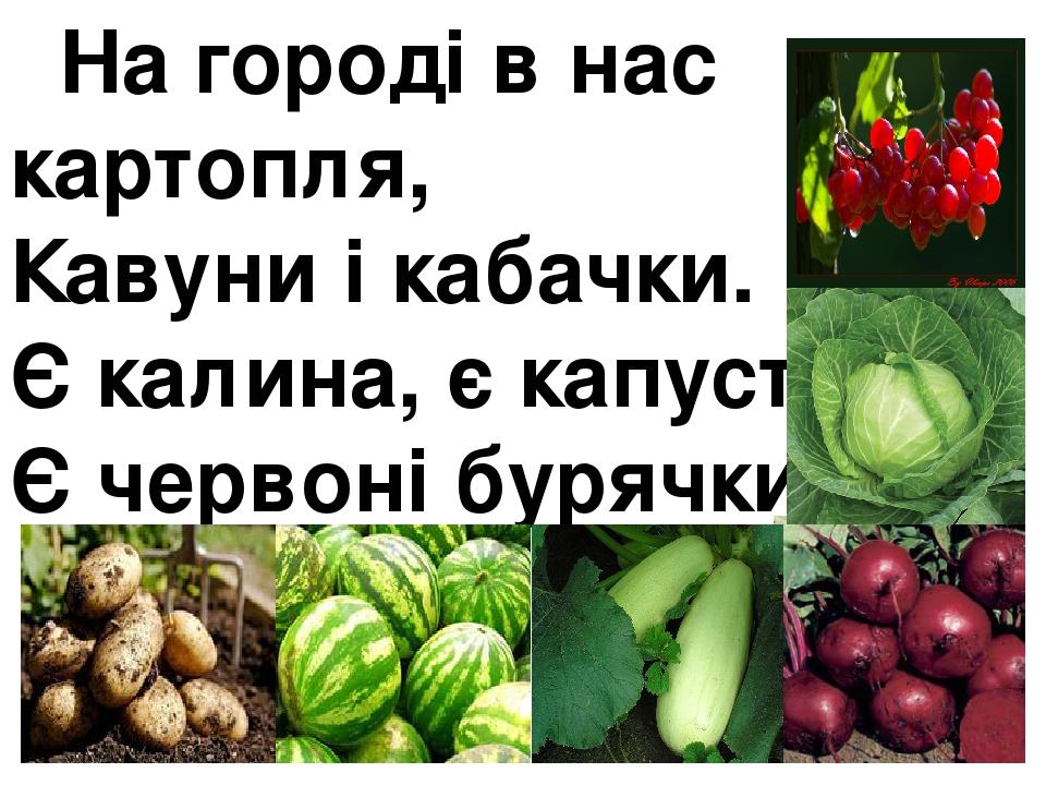 На городі в нас картопля, Кавуни і кабачки. Є калина, є капуста, Є червоні бурячки.