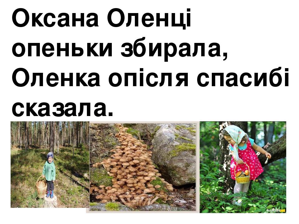 Оксана Оленці опеньки збирала, Оленка опісля спасибі сказала.