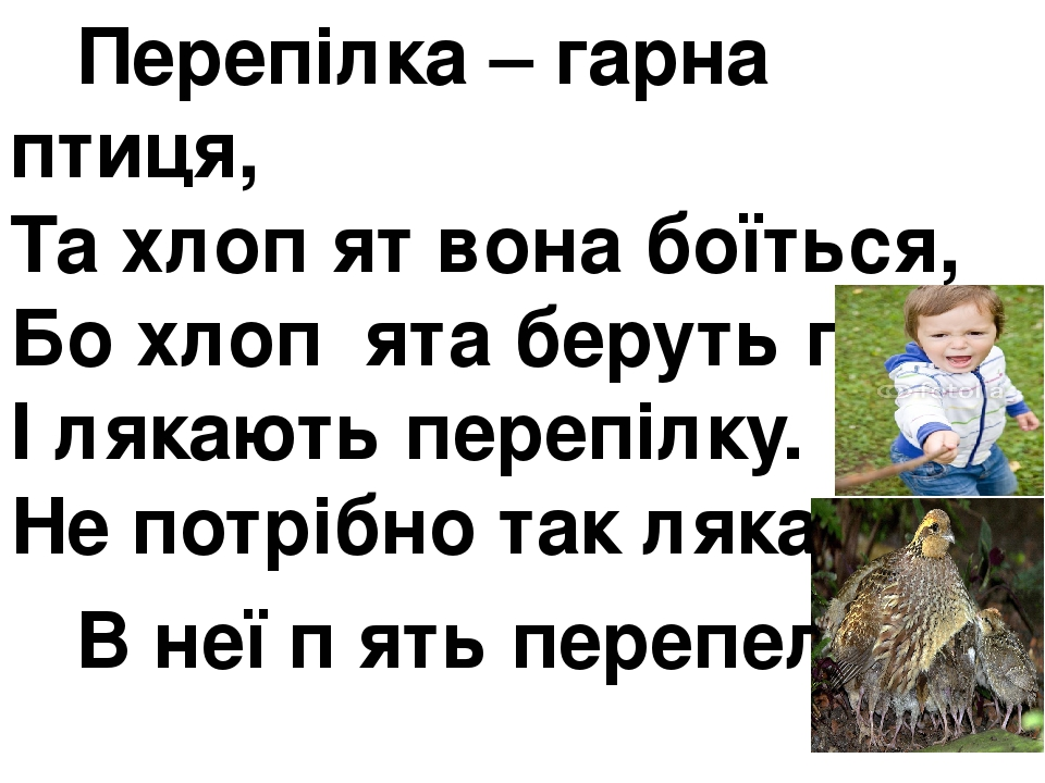 Перепілка – гарна птиця, Та хлоп ят вона боїться, Бо хлоп′ ята беруть гілку І лякають перепілку. Не потрібно так лякать, В неї п ять перепелят.