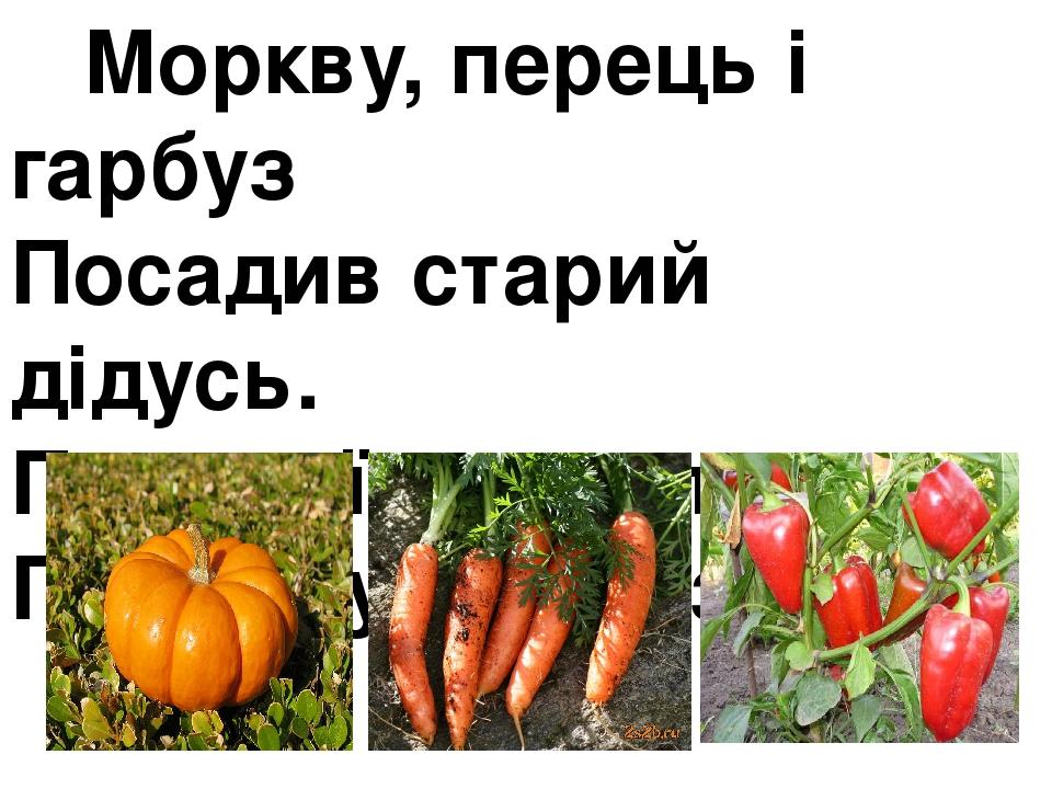 Моркву, перець і гарбуз Посадив старий дідусь. Пестив їх та поливав – Гарний урожай зібрав.