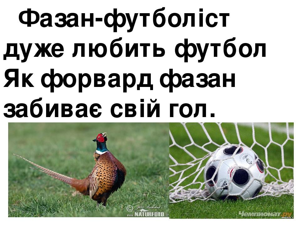 Фазан-футболіст дуже любить футбол Як форвард фазан забиває свій гол.