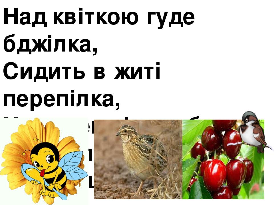 Над квіткою гуде бджілка, Сидить в житі перепілка, На черешні горобець, А хто зловить – молодець.