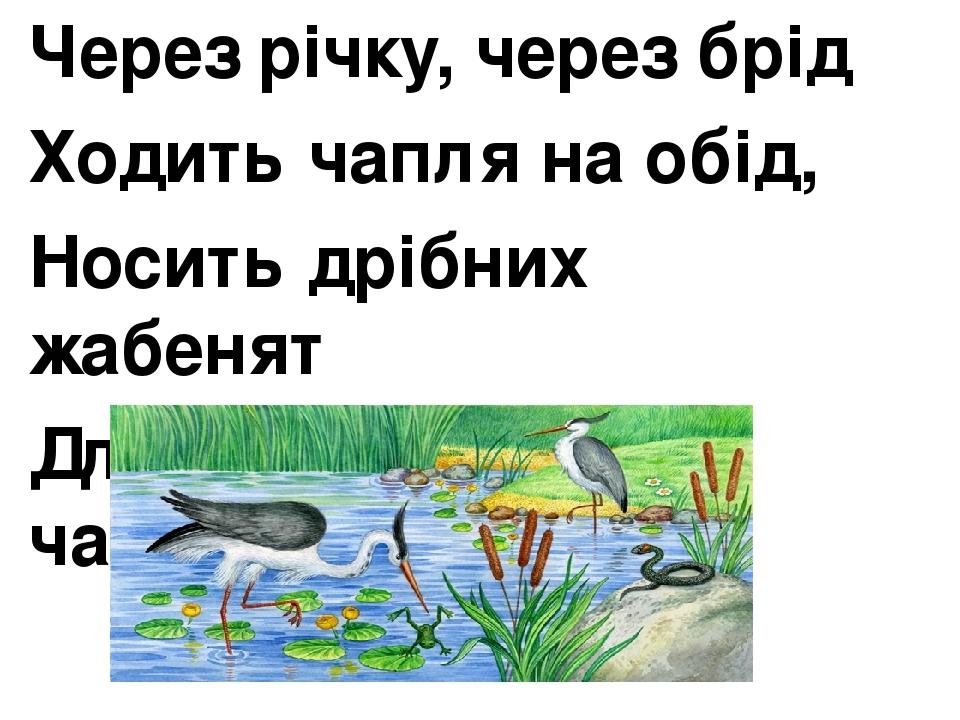 Через річку, через брід Ходить чапля на обід, Носить дрібних жабенят Для маленьких чапленят.