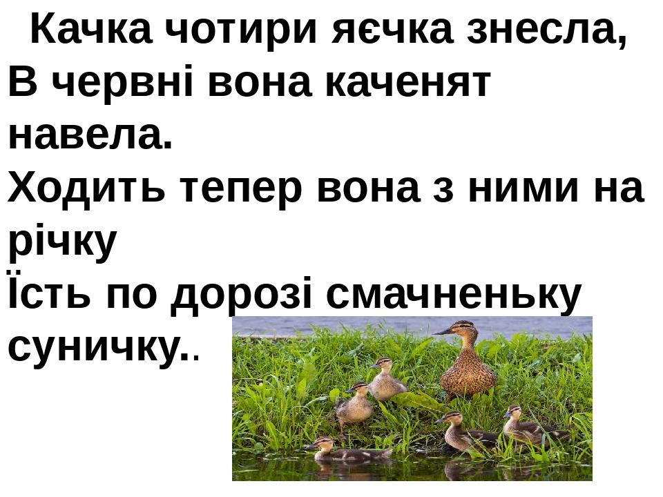 Качка чотири яєчка знесла, В червні вона каченят навела. Ходить тепер вона з ними на річку Їсть по дорозі смачненьку суничку..