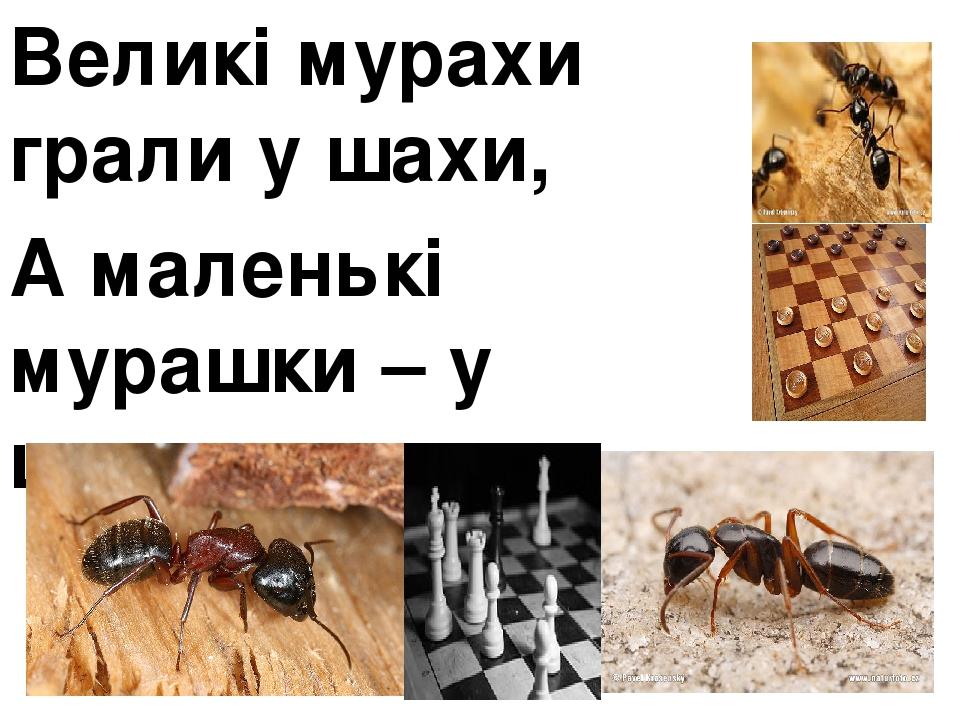 Великі мурахи грали у шахи, А маленькі мурашки – у шашки.