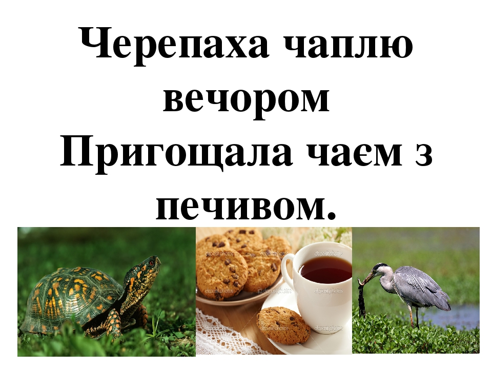 Черепаха чаплю вечором Пригощала чаєм з печивом.