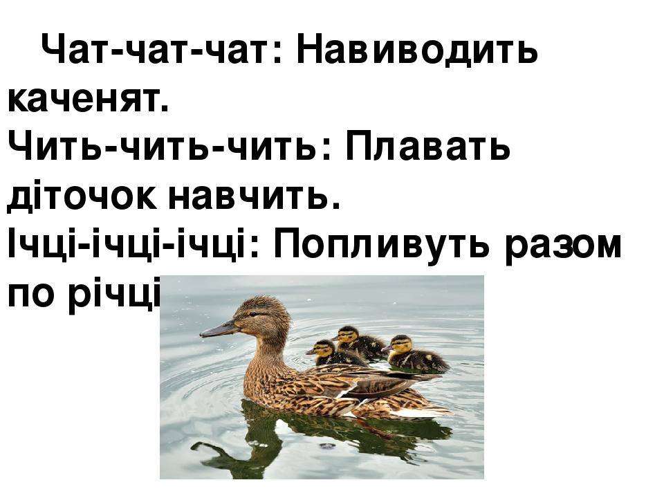 Чат-чат-чат:Навиводить каченят. Чить-чить-чить:Плавать діточок навчить. Ічці-ічці-ічці:Попливуть разом по річці.
