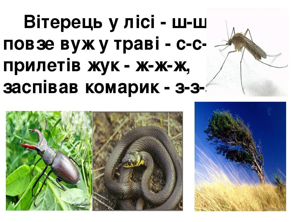 Вітерець у лісі - ш-ш-ш, повзе вуж у траві - с-с-с, прилетів жук - ж-ж-ж, заспівав комарик - з-з-з.